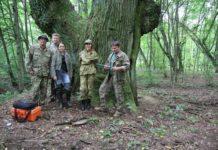 проект, лес, гомельская область