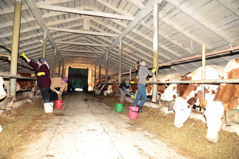 санстанция, порядок, ферма, сельхозпредприятия