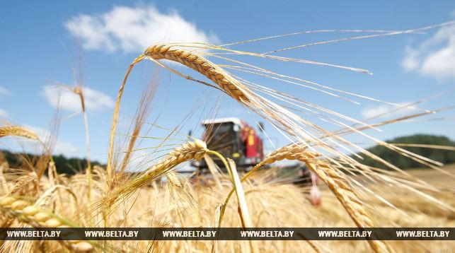 поле, пшеница, уборчная