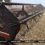 комбайн, поле, пшеница