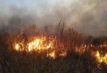 милошевичи, пожар, граница, украина, люди, безопасность