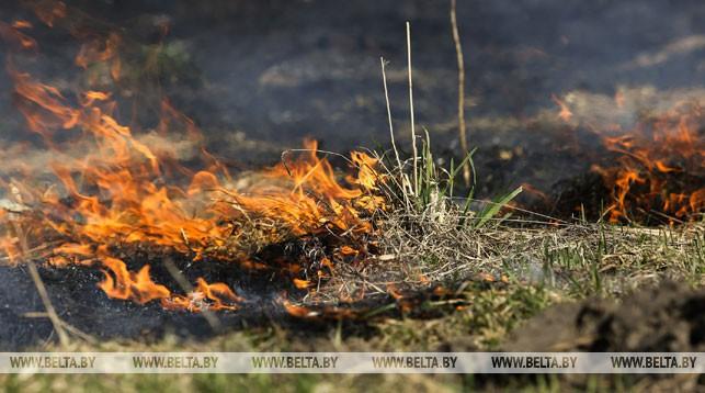 пожар, трава