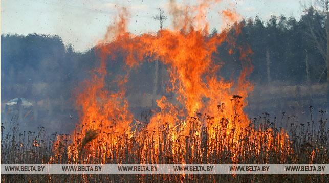 огонь, пожар, трава