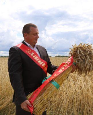 зажинки, сноп, пшеница