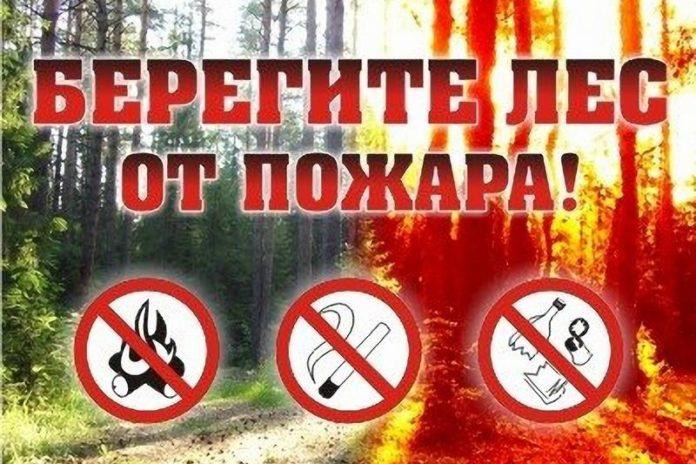 пожар, лес, огонь
