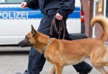 полиция, собака