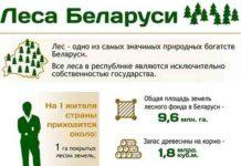 Инфографика, лес, БелТА