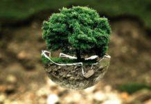 лес, лесничество, день работников леса