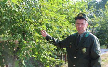 Тушинский, лесхоз, Лельчицы