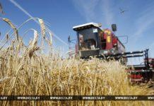 комбайн, пшеница, уборочная