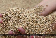 уборочная, пшеница