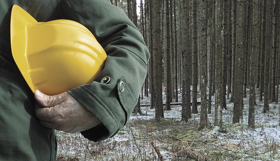 Лельчицы, охрана, труд, мониторинг, лес, заготовка