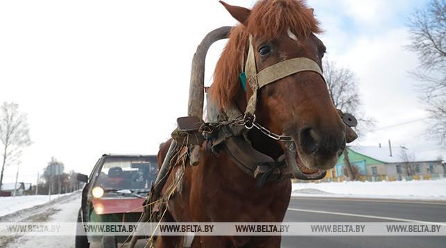 повозка, конь