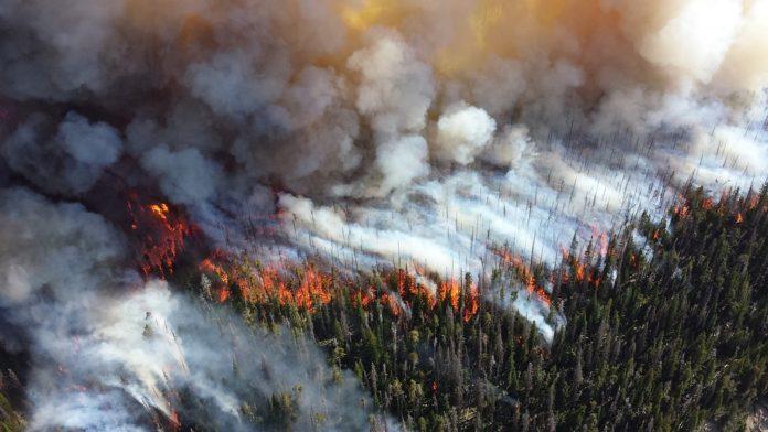 Лес, пожар, опасность, Гомельская область