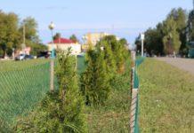 озеленение, Лельчицы, благоустройство