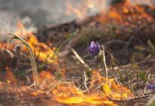 трава, пал травы, огонь