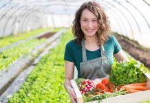 фермер, овощи, хозяйство, сельское хозяйство