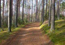дороги, лес