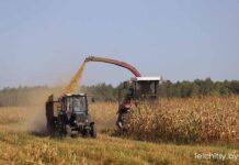 силос, кукуруза