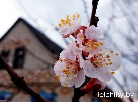 цветы погода